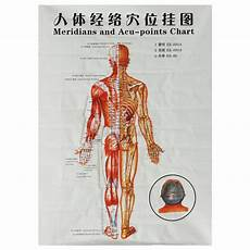 Chinese Body Chart 1pcs Chinese Medicine Body Acupuncture Points Meridians