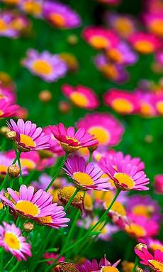 flower meadow iphone wallpaper meadow flowers wallpaper for desktop mobile