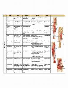 Muscle Origin And Chart Pdf Complete Muscle Chart Free Download