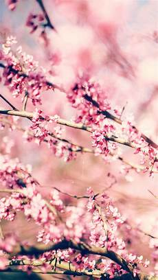 iphone wallpaper hd cherry blossom 27 floral iphone 7 plus wallpapers for a