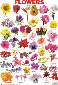 Flower Chart With Names And Pictures Indian Flower Name List With Image Picture In France For