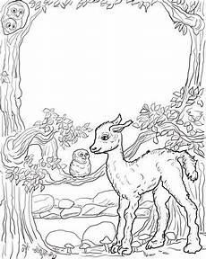 Ausmalbilder Tiere Lama Ist Deine Ein Llama Ausmalbild Ausmalbilder