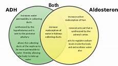 Adh Vs Aldosterone Venn Diagram Adh Vs Aldosterone Google Search Nursing School Notes