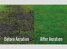 Lawn Aeration service to do or not to do?   The Grass