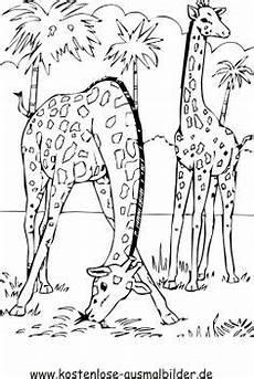 ausmalbilder afrikanische tiere afrika