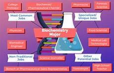 Exercise Science Job Salary 12 Jobs For Biochemistry Majors The University Network