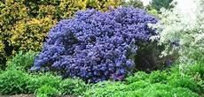 fiori da vaso perenni piante perenni da giardino resistenti tutto l anno