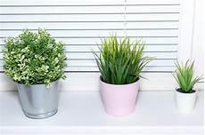piante da davanzale vasi da fiori sul finestra davanzale fotografia stock