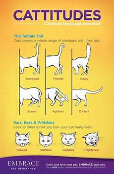 Cat Behavior Chart Cat Behavior Decoded Learn What Your Cats Moves Mean