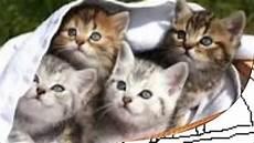 Katzen Malvorlagen Zum Drucken Katzen Ausmalbilder