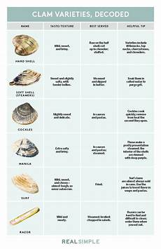 Shellfish Chart Here S Every Type Of Clam In One Simple Chart Clam