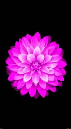 iphone x flower wallpaper hd iphone flower wallpaper hd wallpapers
