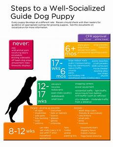 Puppy Exercise Chart Guide Dogs For The Blind Online Puppy Raising Manual