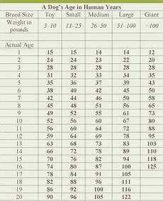 Puppy Age Chart Dog Age Chart By Size Veterinary Nutrition Essentials