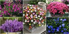 fiori da vaso perenni fiori da balcone creare uno spazio green roba da donne
