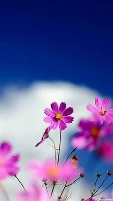 flower wallpaper for cell zedge free downloads for your cell phone free your