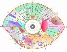 Iridology Diagnosis Chart Left Eye Iridology Chart Iriscope Iridology Camera