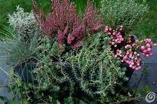 piante da davanzale alberi per siepi sempreverdi decorazioni per la casa