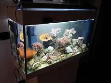 vasche aperte per acquari vasca per acquario marino acquari di casa