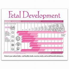 Pregnancy Timeline Chart Fetal Development In Pregnancy Tear Pad Childbirth Graphics