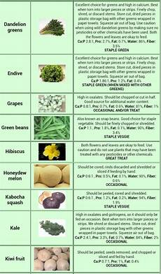 Iguana Food Chart 40 Best Images About Bearded Dragon On Pinterest