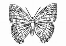Malvorlage Schmetterling Pdf Malvorlagen Insekten Schmetterlinge K 228 Fer Lustige
