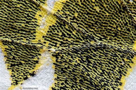 what color does black and yellow make does yellow and black make green quora