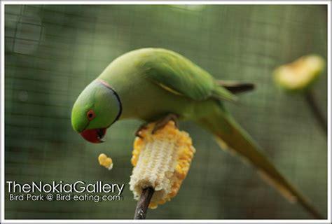 bird park bird eating corn flickr photo sharing