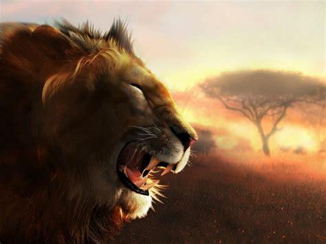 imagenes de leones en movimiento impresionante fondo de leones fondos de escritorio gratis
