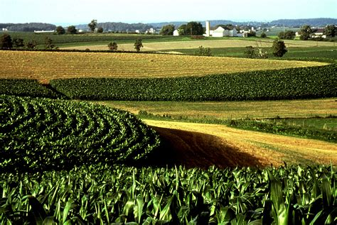soil helping  amish  organic