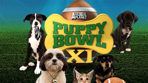 puppy bowl 2016 blackmouthcurs puppy bowl 2016 how to and livestream blackmouthcurs