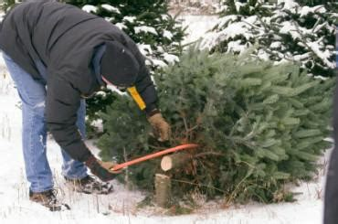 nh magazine best cut your own christmas tree cutting your own tree in northern illinois