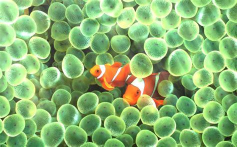 desktop hd aquarium fish wallpaper