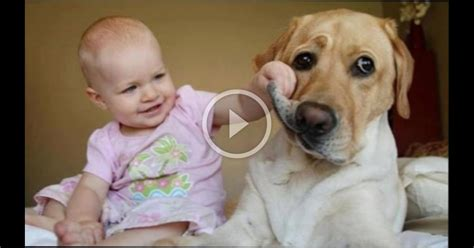 babies laughing at dogs babies laughing hysterically at dogs compilation wbmvideo 1903043911