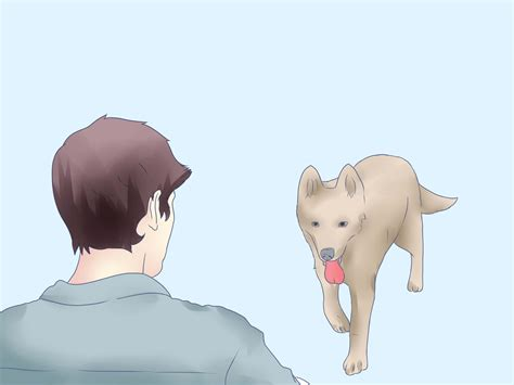 buy a husky puppy 3 ways to buy a siberian husky puppy wikihow
