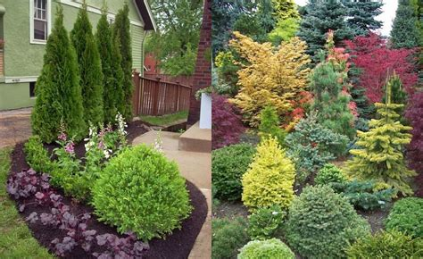 Evergreen Landscaping Ideas Evergreen Landscaping Ideas House Decor Ideas