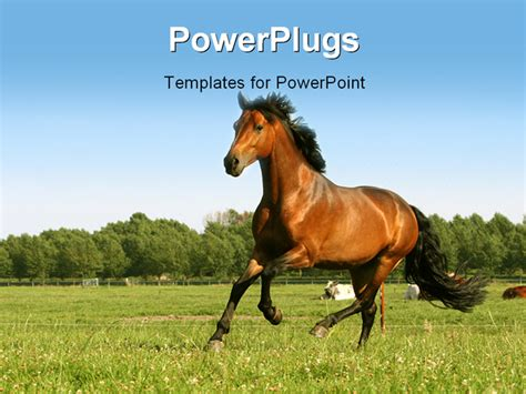 powerpoint themes horse big horse inflation picture images frompo