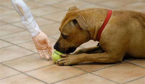 7 month puppy behavior panels community the newstalkers