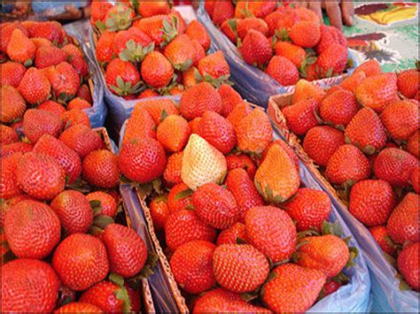 Strawberry Ct C la clickthecity travel