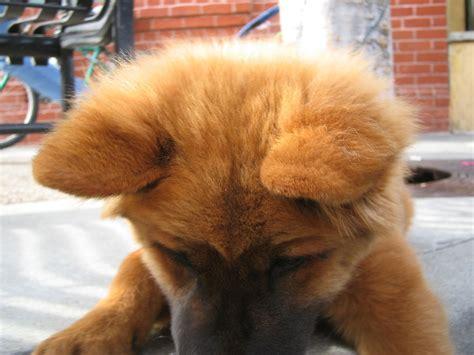 imagenes animales con pelo pelo animal wikipedia la enciclopedia libre