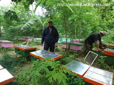 Madu Ternak Asli Ukuran Sedang jual madu murni asli dari peternak lebah wiralink