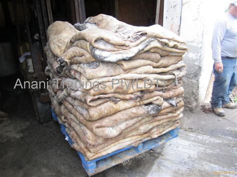 Selling Cow Hides Salted Cow Hides From South Africa Selling Leads