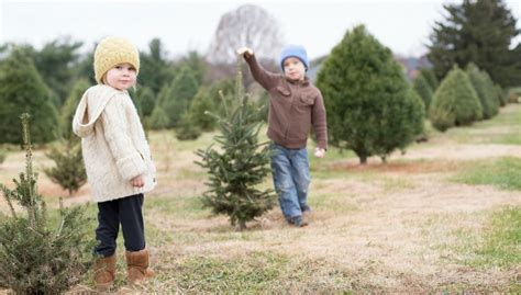 6 family friendly christmas tree farms in west michigan