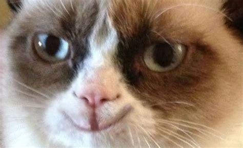 Happy Grumpy Cat Meme - grumpy cat happy blank template imgflip