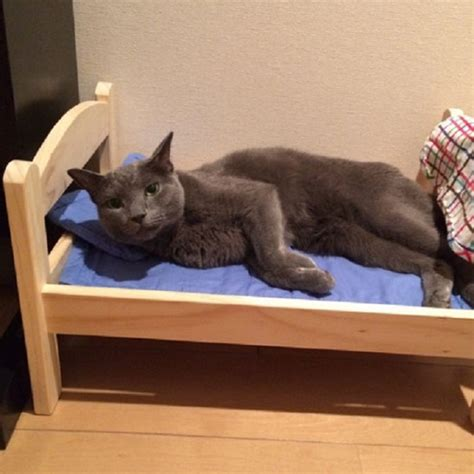 beds for cats ikea donates doll beds for shelter cats and it s just too