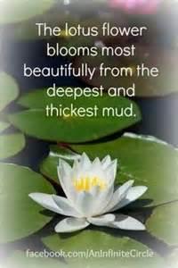 Few Lines About Lotus Lotus Flower Quotes Quotesgram