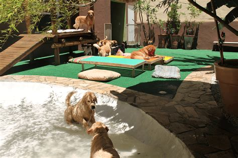 layout de hotel para cachorro parque dos c 227 es creche e hotel vila mariana sao paulo