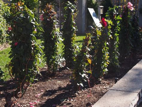 Minnesota Botanical Gardens 227 Best Botanical Gardens On Pinterest Images On