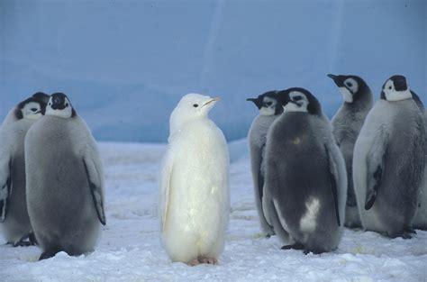Penguin S penguin shoebill