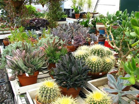 cacti and succulents palmiters garden nursery